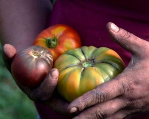 agriculture traditionnelle ferme de Berdin Banos