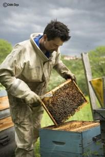 ruches de la ferme