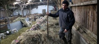 Sylvain dans la bergerie