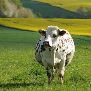 vache-durey.080-web