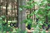 Sentier - Forêt - La Ferme Genest