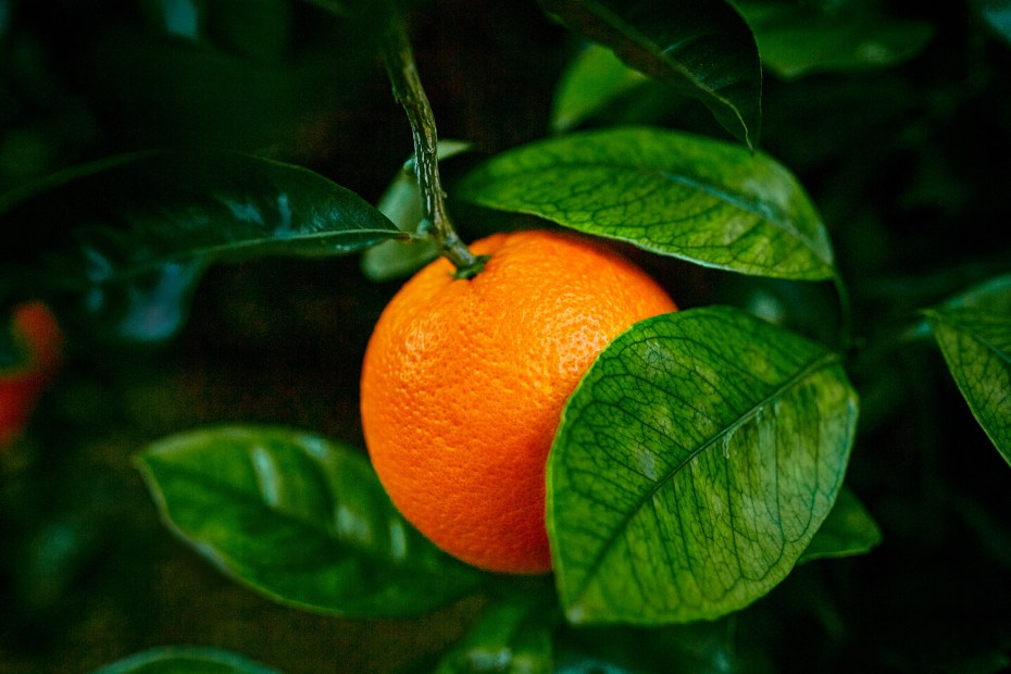 imagen-corporativa-empresa-citricos