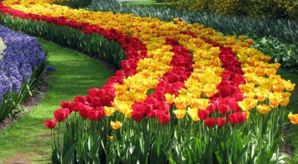 Тюльпаны в ландшафтном дизайне дачного участка: где лучше ...