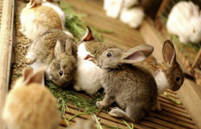 Отсадка крольчат от самки