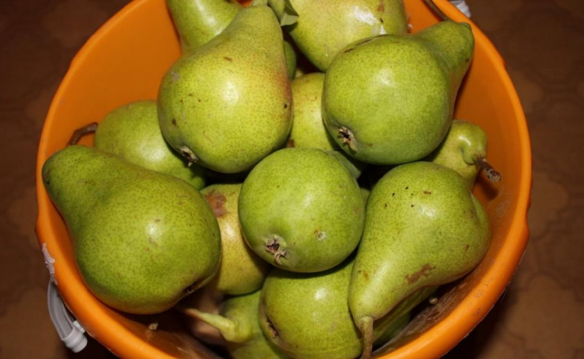 Урожай груши Аллегро