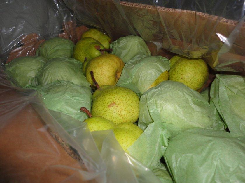 Хранение груши сорта Пакхам