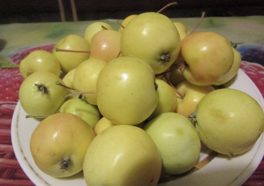 Яблоки Золотой ранет