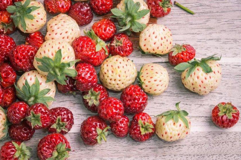 Плоды Ананасной клубники