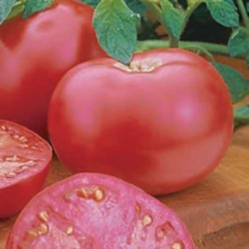 Пинк Леди F1 — купить семена высокорослых томатов, Seminis ...