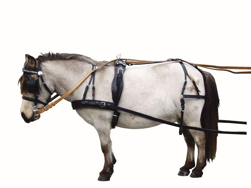 именно вожжа лошадь картинка окунь самый распространенный