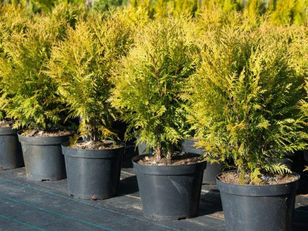 Хороший уход позволит сохранить здоровье растений