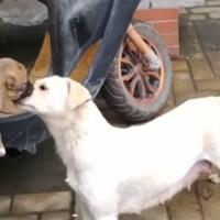 Perrita se despide triste de su cachorro que dieron en adopción