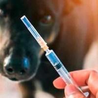 Veterinarios inyectan a personas con vacuna contra COVID-19 para perros