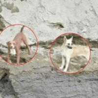 Rescatan a perros que cayeron al socavón en Puebla
