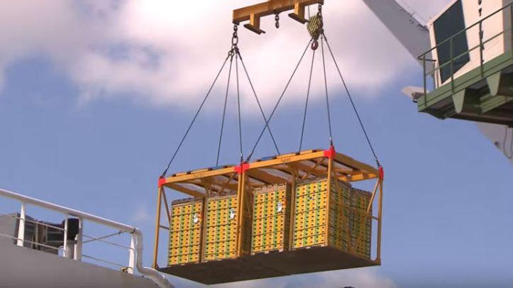 kiwi fruit shipment 16x9