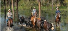 Cattle Ranching photo