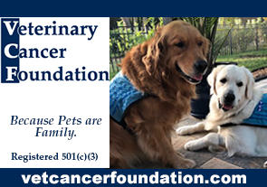 vet center foundation