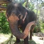 Ein Elefant winkt uns zu