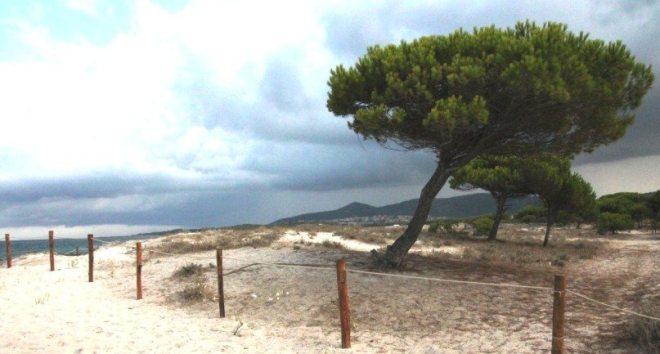 Pinienstrände bei Budoni-Ostküste Sardinien