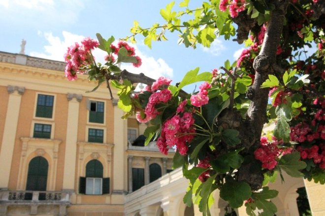Wunderbarer Frühling in Wien: Am Schloss Schönbrunn