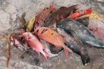 Fischmarkt Matemwe auf Sansibar Backpacking-Tipp
