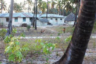 Das Dorf Pingwe auf Sansibar