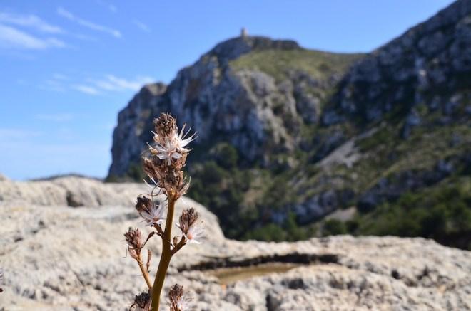 Cap Formentor im Norden Mallorcas