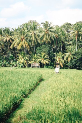 Bali Backpacking Route: Tipp - Ubud Reisfelder