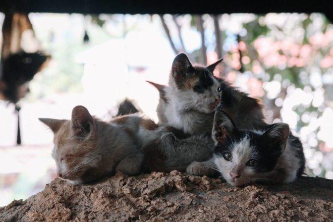 Katzen am Dauuw Home