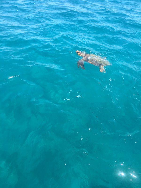Schildkröten auf der Zakynthos Insel - Caretta caretta