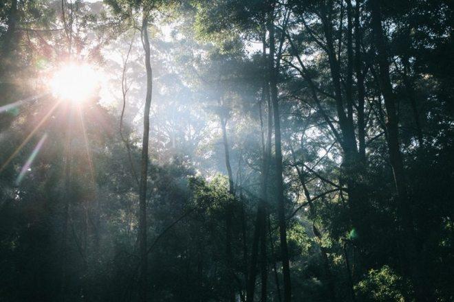 Übernachtung im Wald bei Albany - Westaustralien Route und Roadtrip