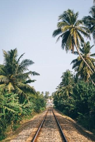 Zugfahren in Sri Lankas Süden ist ein toller Backpacking Tipp - und Palmen gibt es obendrauf