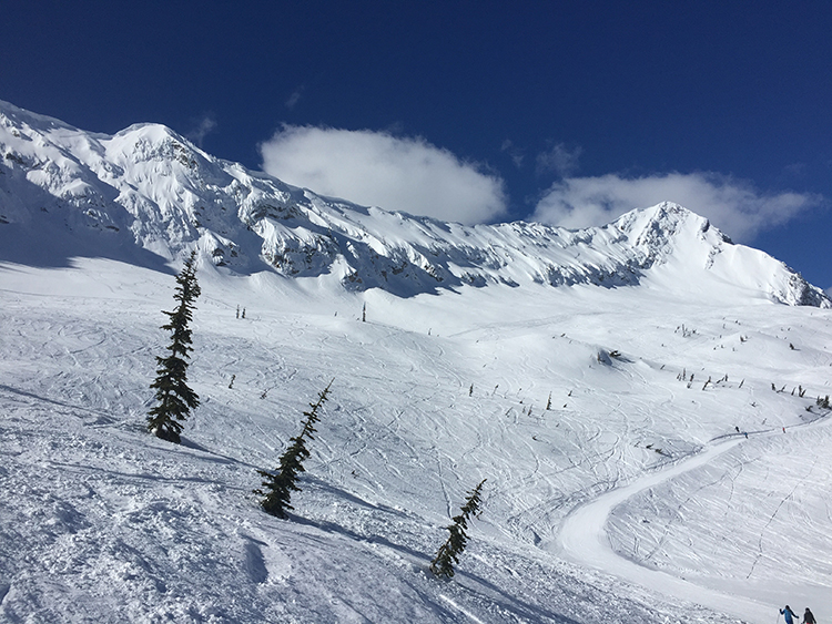 Fernie Lizard Bowl