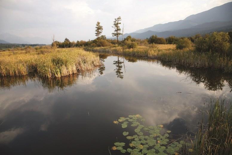 Columbia River Wetlands, near Golden
