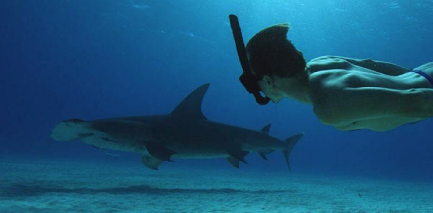 IFF Screening Sharkwater Extinction