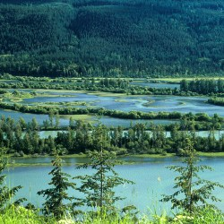 Logging threatens Columbia Wetlands