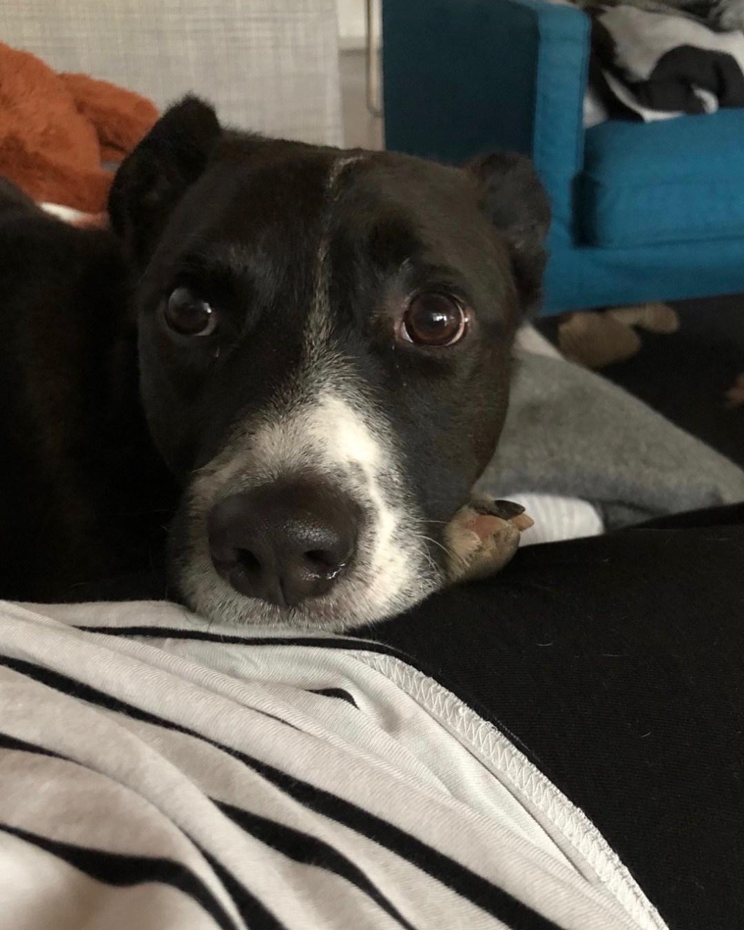 Unsere Erfahrungen: die ersten Monate mit Hund
