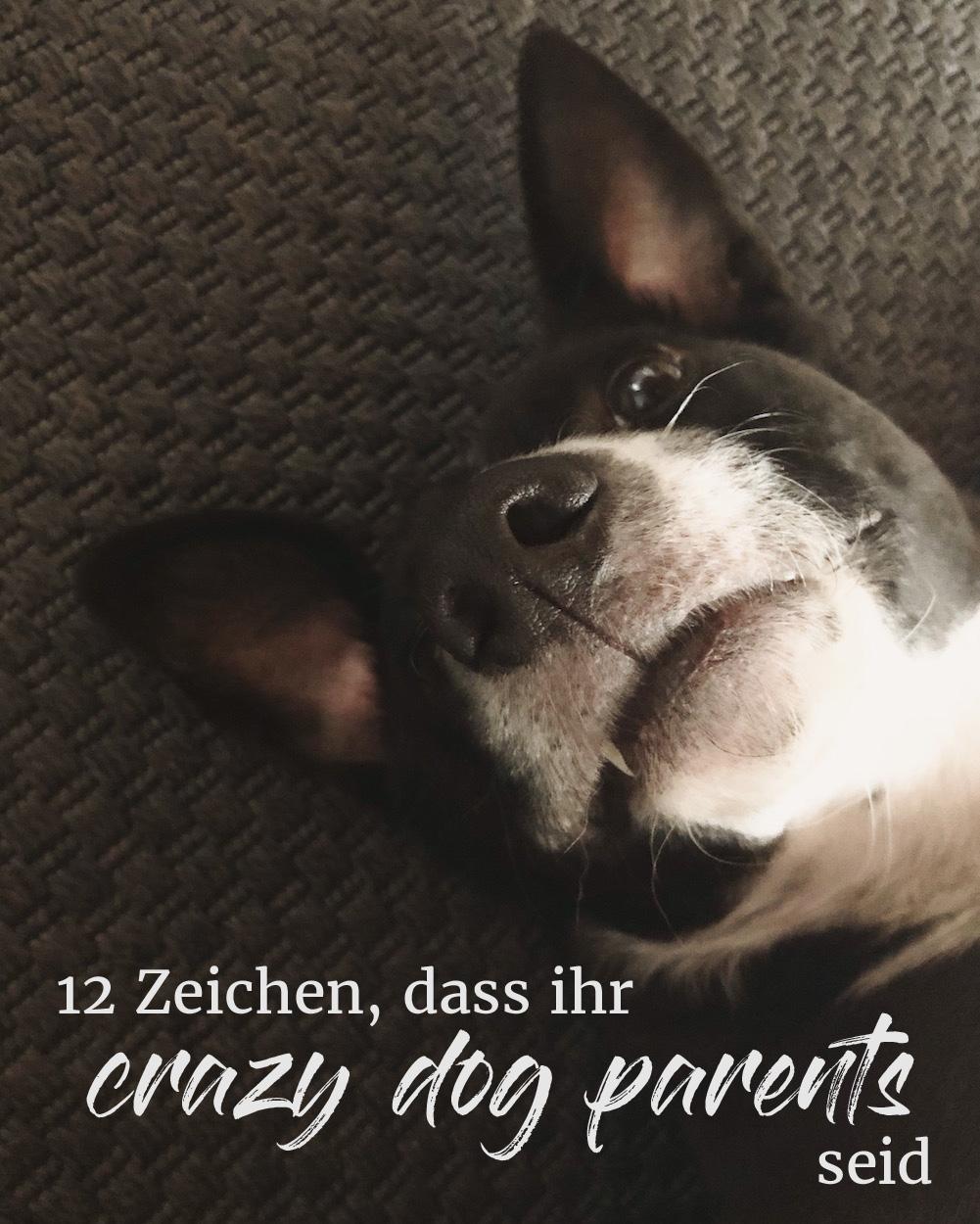 12 klare Zeichen, anhand derer auch du bestimmen kannst, ob du zu den crazy dog parents gehörst.
