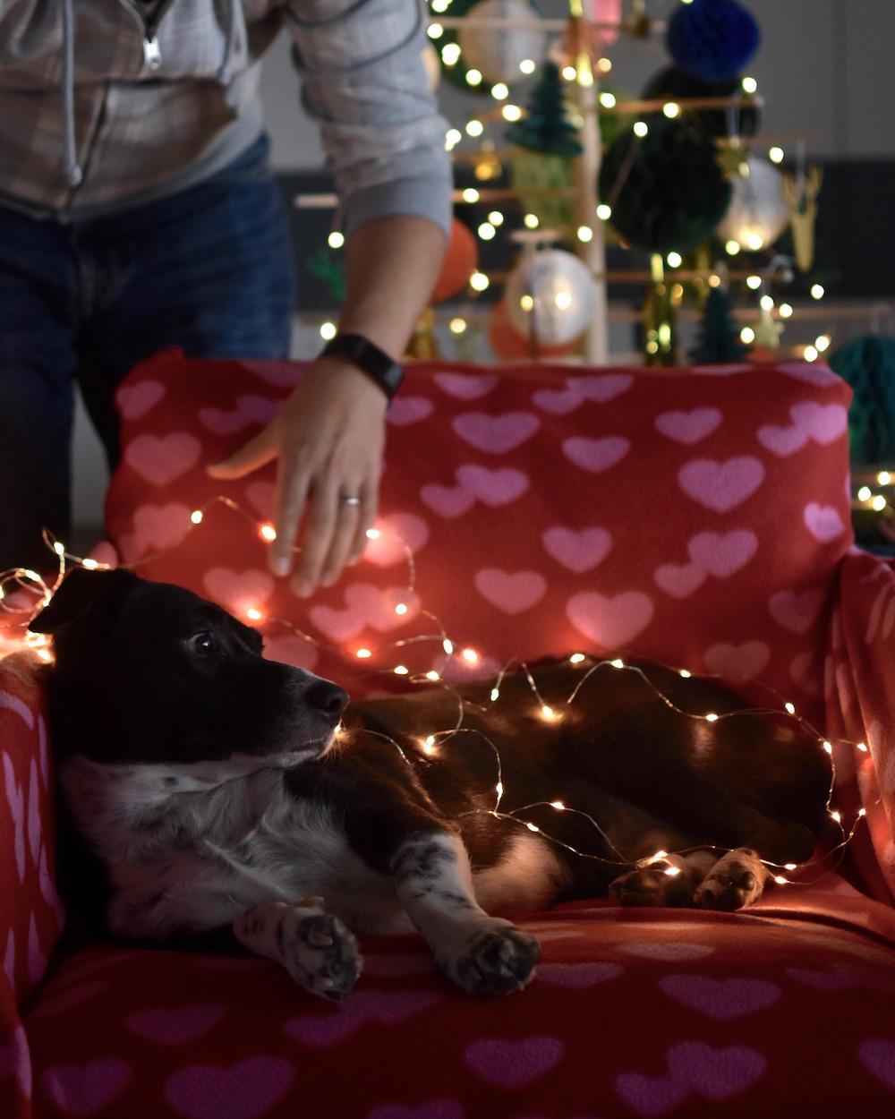 Unsere Weihnachtskarte mit Hund 2018