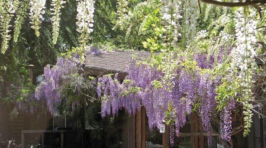 Beautiful flowers at Fern Lodge