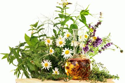 <strong>Heilpflanzen bestimmen und richtig anwenden. </strong><br /> © Marina Lohrbach - Fotolia.com
