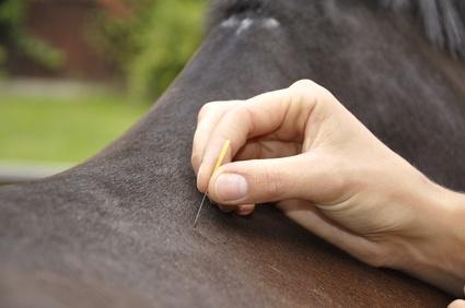 Pferde und andere Tier fernöstlich behandeln. © Roland Gruenewald - Fotolia.com