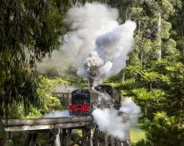 Puffing Billy. Photo: Michael Greenhill.