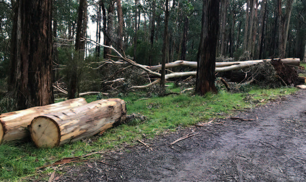 After the Storm: Spring in the Dandenong Ranges