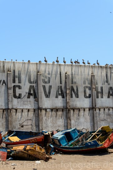 Pelikane auf Mauer