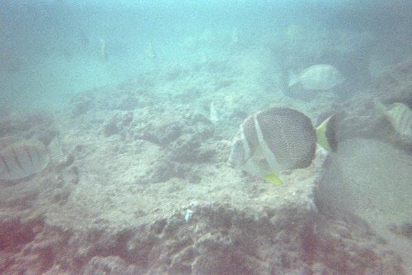 06_Snorkeling-Hanauma-Bay-Oahu-Hawaii.jpg