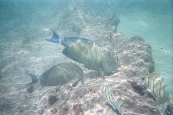 08_Fishes-Snorkeling-Hanauma-Bay-Oahu-Hawaii.jpg