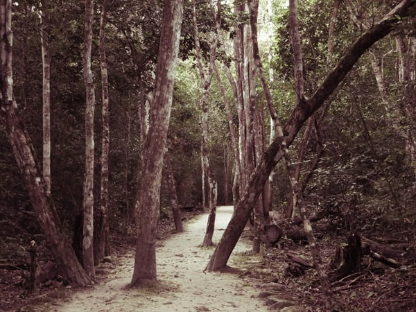 Calakmul Mexiko Maya Hochburg Waldweg Urwald Dschungel