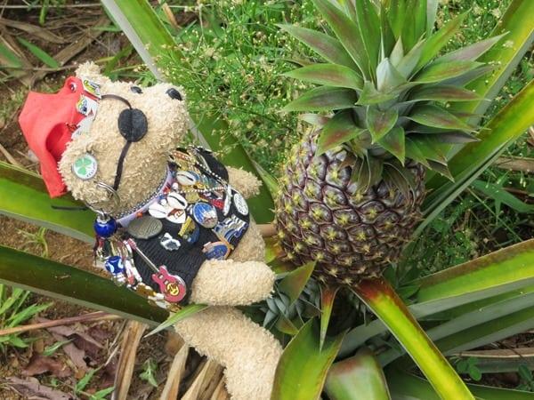 93_Jack-Bearow-Ananas-Botanical-World-Hilo-Big-Island-Hawaii