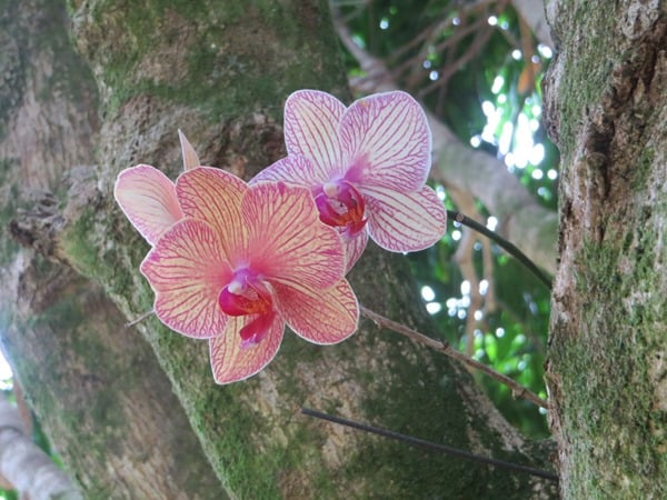 95_Blumen-Botanical-World-Hilo-Big-Island-Hawaii